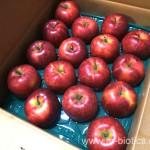 竹嶋さんのりんご