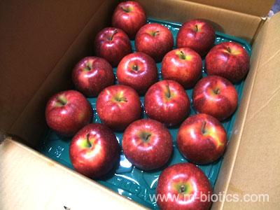 自然農法「竹嶋さんのりんご」だけをタッパーに詰めた「りんご弁当」で体スッキリ