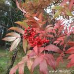 富良野森林公園