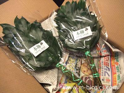熊野の立派な本榊を取り寄せてみた