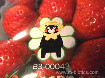 熊本県産の苺「ひのしずく」にくまモン
