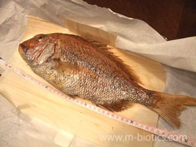 「鯛の浜焼き」を今治から取り寄せてみた~噛めば噛むほど味が出る