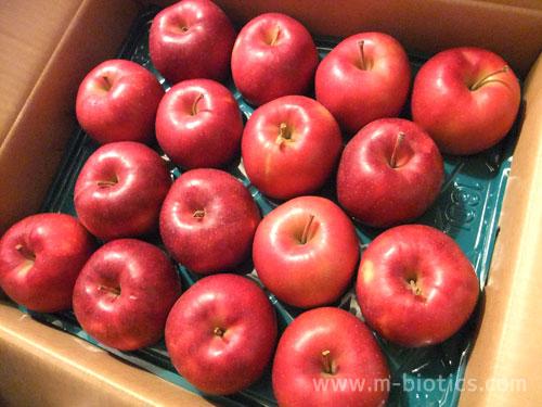 竹嶋有機農園のりんご、今年は初めてドドーンと15kg購入
