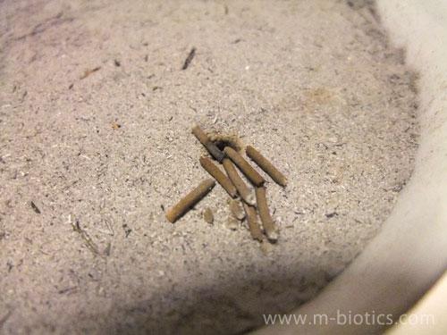塩に線香を立てると燃え残る~代わりに「わら灰」を使ったら最後まで燃えてびっくり