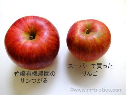 竹嶋 りんご サンつがる